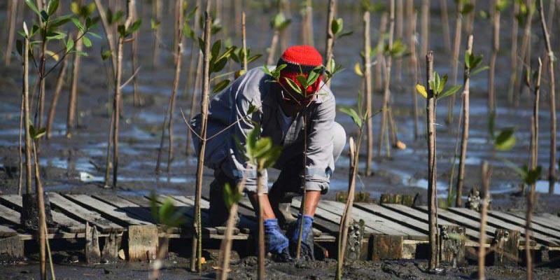 Presentan 'Ojo Verde', proyecto dedicado al combate de crisis en manglares de Brasil   El Imparcial de Oaxaca