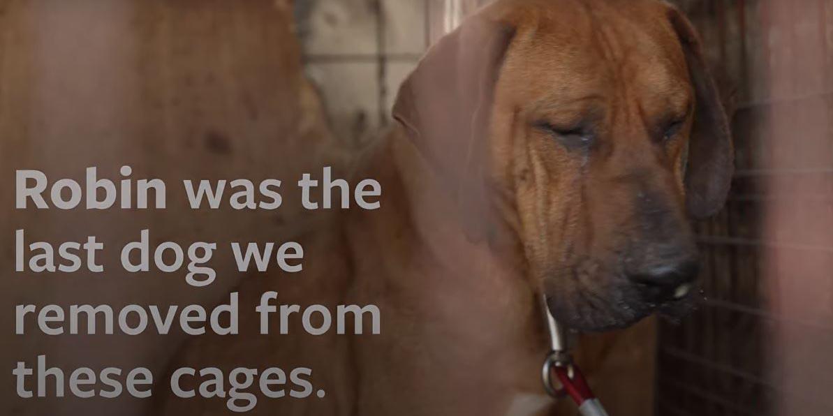 Video: perrito llora al ser rescatado de ser sacrificado | El Imparcial de Oaxaca