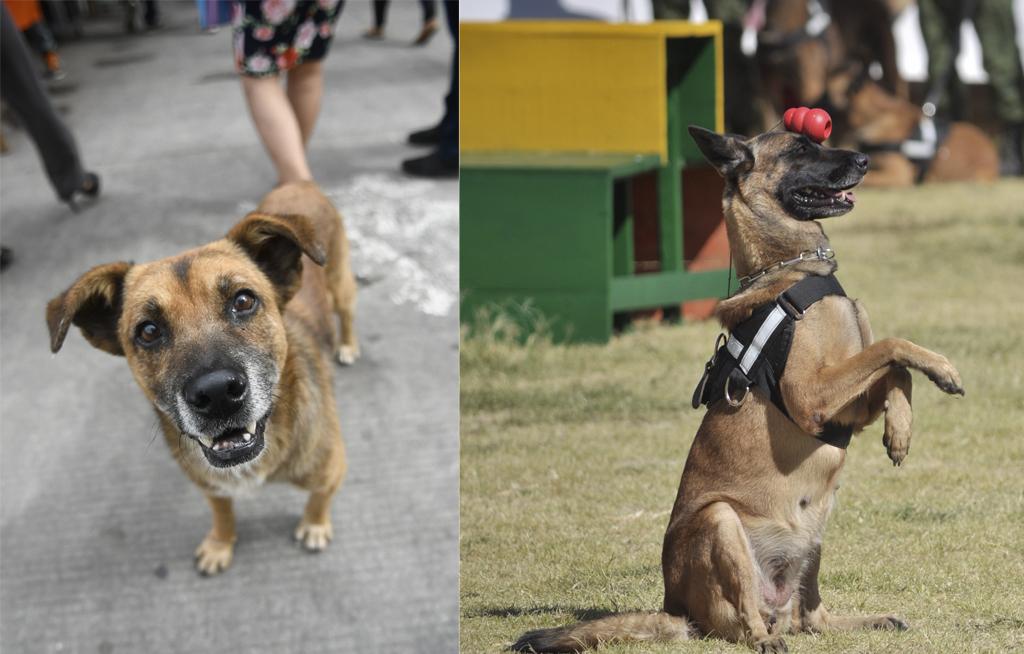 Día Mundial del Perro: origen, significado y por qué se celebra el 21 de julio   El Imparcial de Oaxaca
