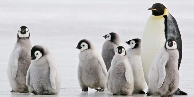 Microplásticos fueron hallados en la dieta de los pingüinos de la Antártida | El Imparcial de Oaxaca
