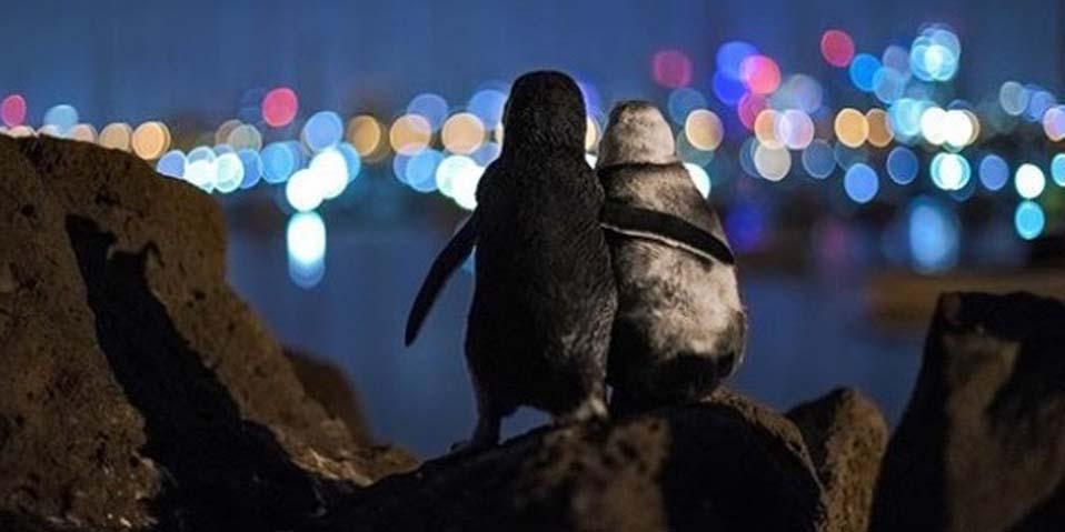 Esta es la triste historia de los pingüinos abrazados que se hicieron virales   El Imparcial de Oaxaca