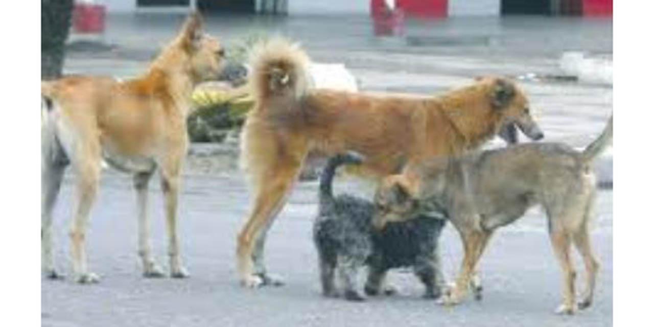 Realizarán jornada de esterilización canina y felina en Huajuapan | El Imparcial de Oaxaca