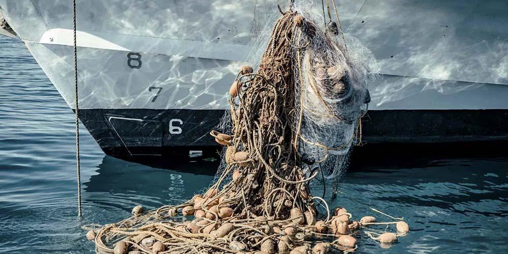 UNESCO aporta dinero para combatir redes ilegales en hábitat de la vaquita marina | El Imparcial de Oaxaca