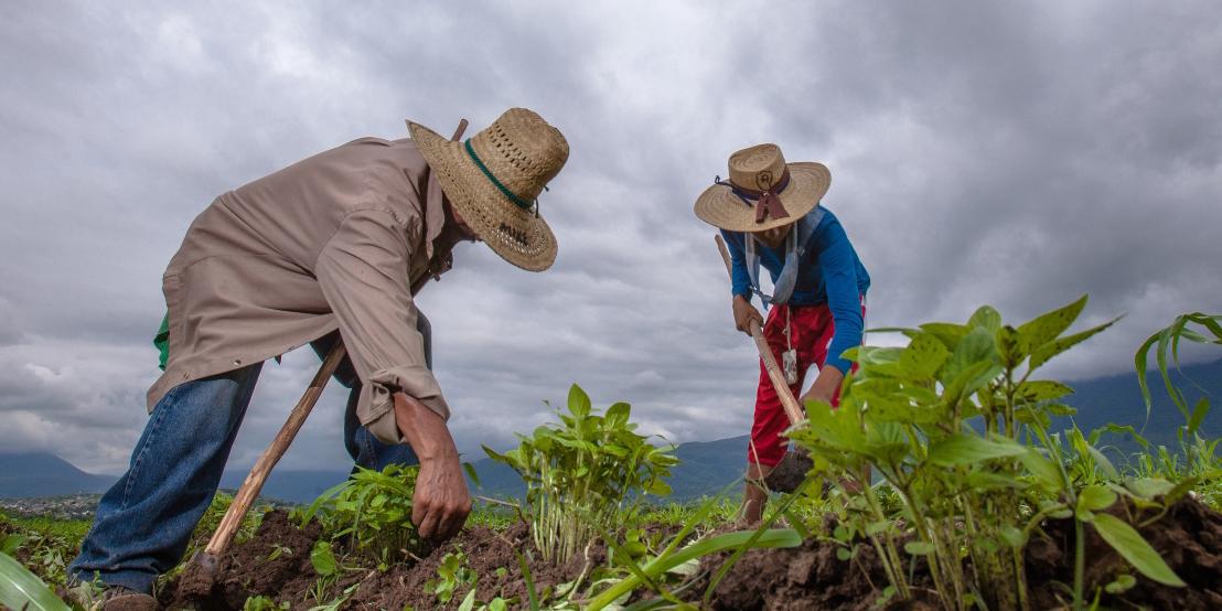 México, EU y Canadá buscan manera de enfrentar efectos de cambio climático en la agricultura | El Imparcial de Oaxaca