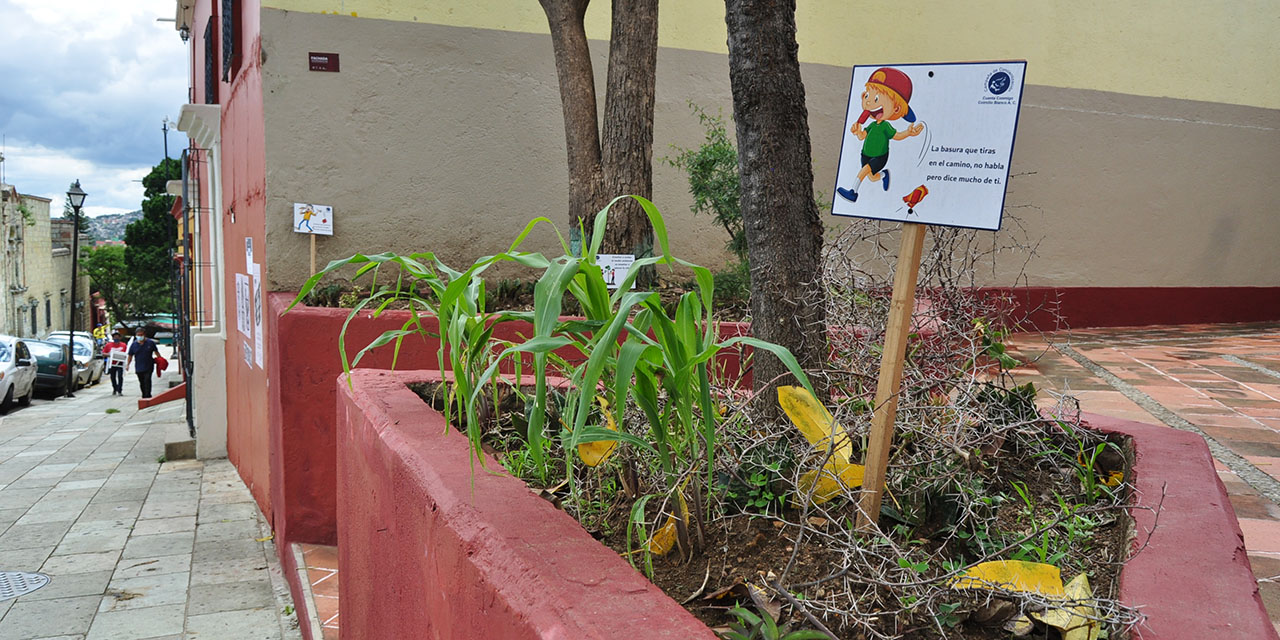 Conflicto por árbol exhibe privatización de plazuela | El Imparcial de Oaxaca