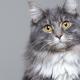 El gato, la mascota ideal
