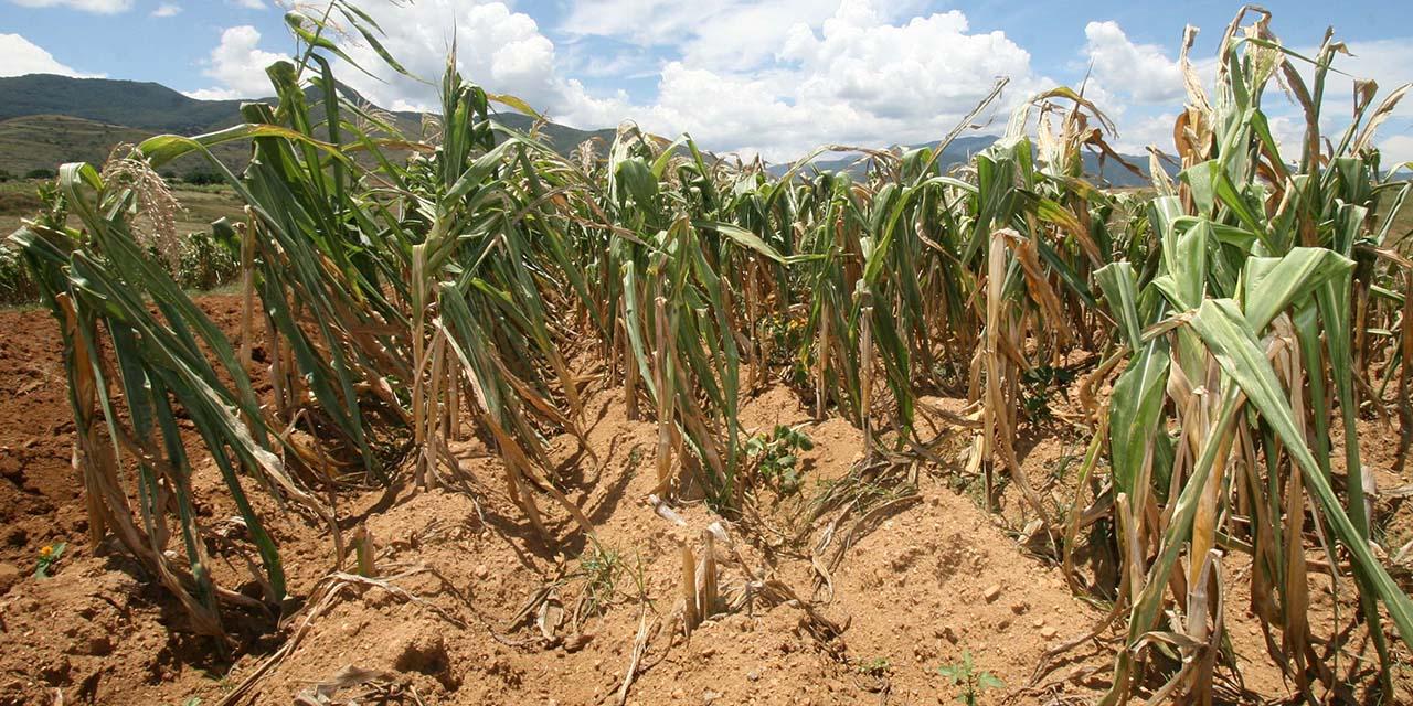 Agro, olvidado en tres años del gobierno de la 4T   El Imparcial de Oaxaca