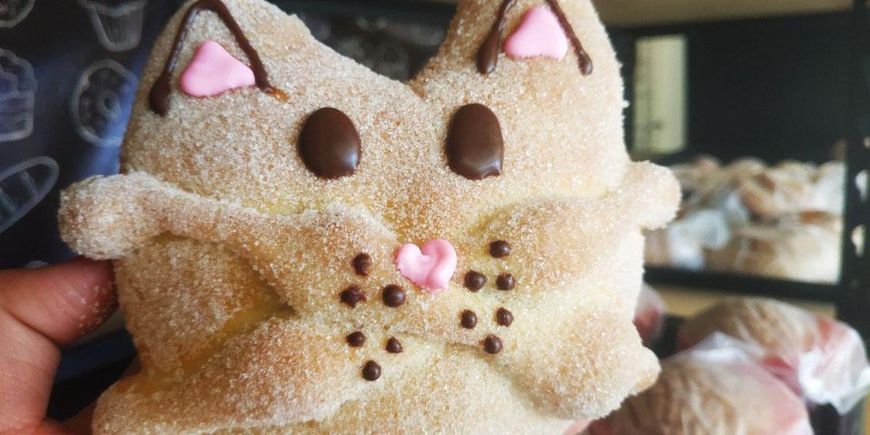 Llega el pan de muerto con cara de gato   El Imparcial de Oaxaca