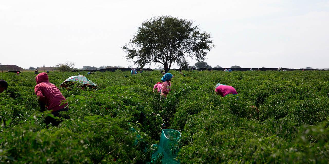Desde los 7 años se preparan para migrar los oaxaqueños | El Imparcial de Oaxaca