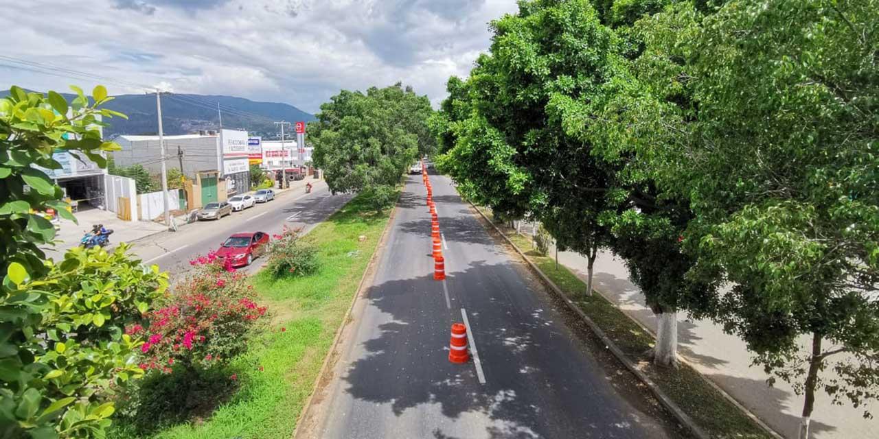 Sociedad civil busca proteger arbolado en Símbolos Patrios y el Monumento a la Madre   El Imparcial de Oaxaca