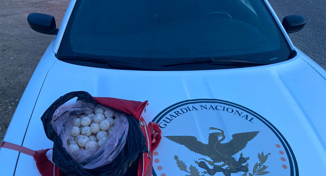 Aseguran 250 huevos de tortuga en Santa María Colotepec   El Imparcial de Oaxaca