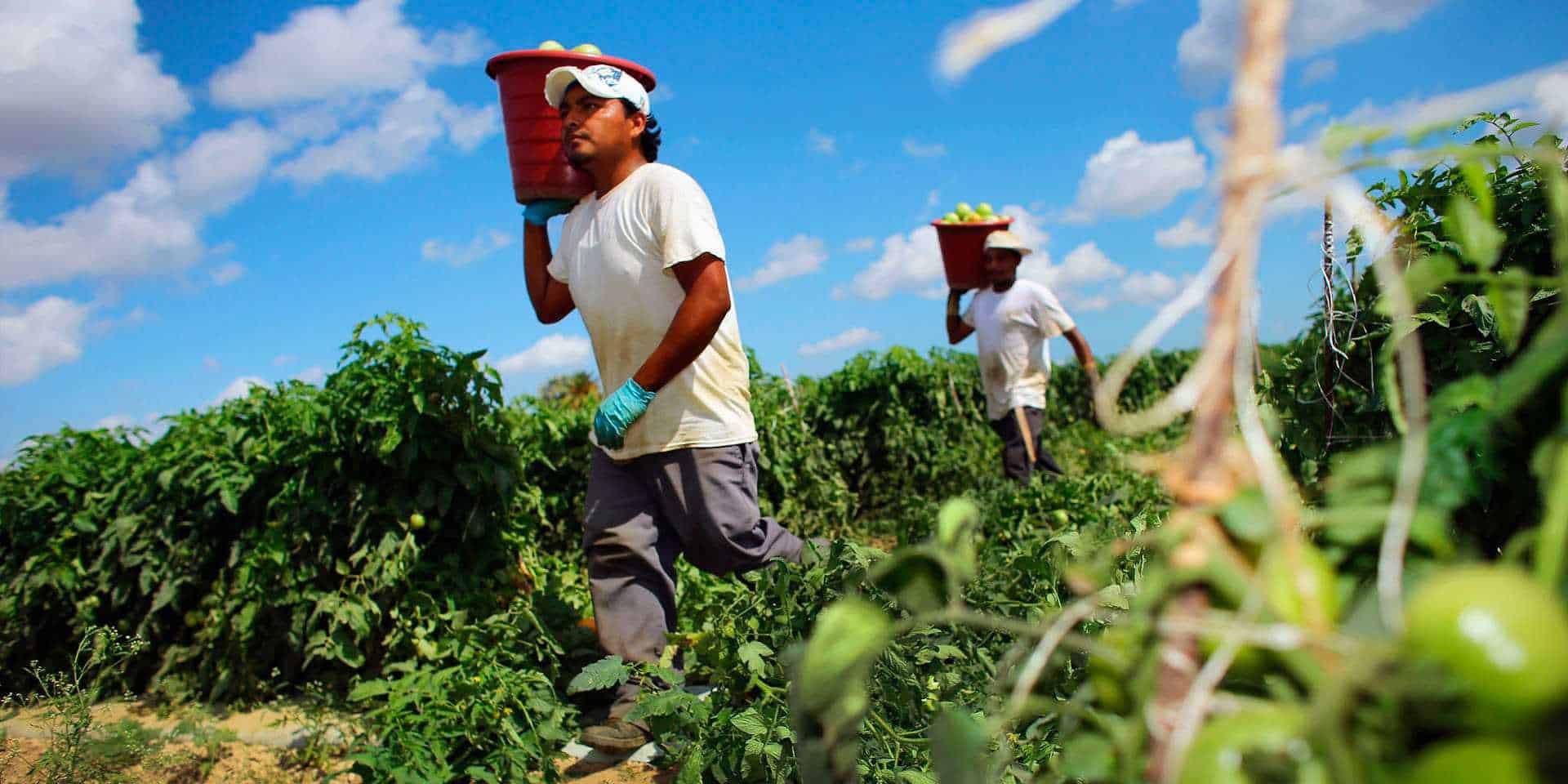 Actividad económica de México cae en un 0.9% durante junio, aseguran datos del INEGI | El Imparcial de Oaxaca