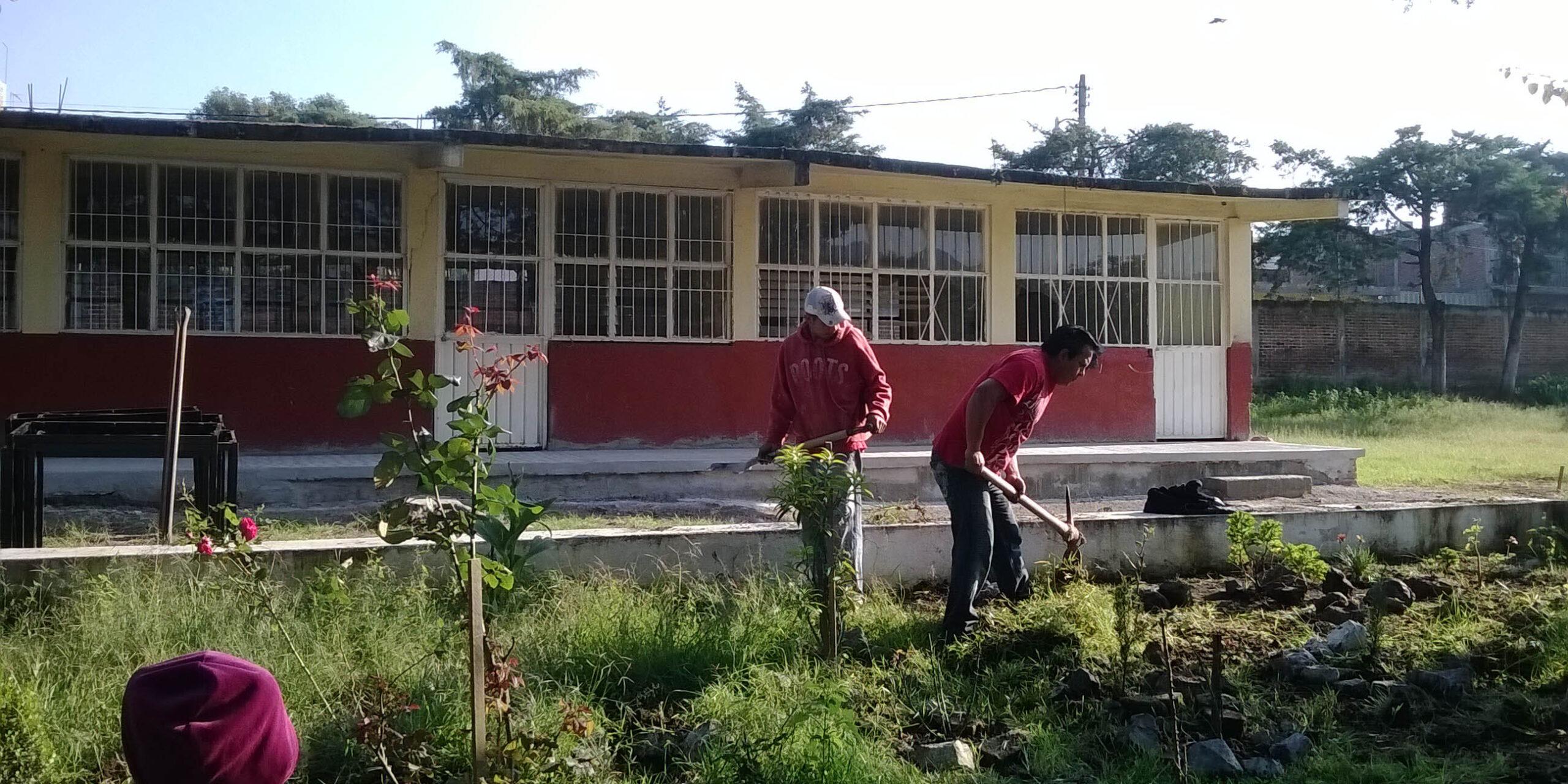 Plaga de ratas retrasa el regreso a clases presenciales en aulas | El Imparcial de Oaxaca