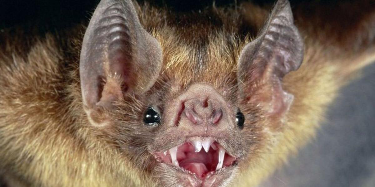 Estudian longevidad en murciélagos que podrían beneficiar a humanos   El Imparcial de Oaxaca