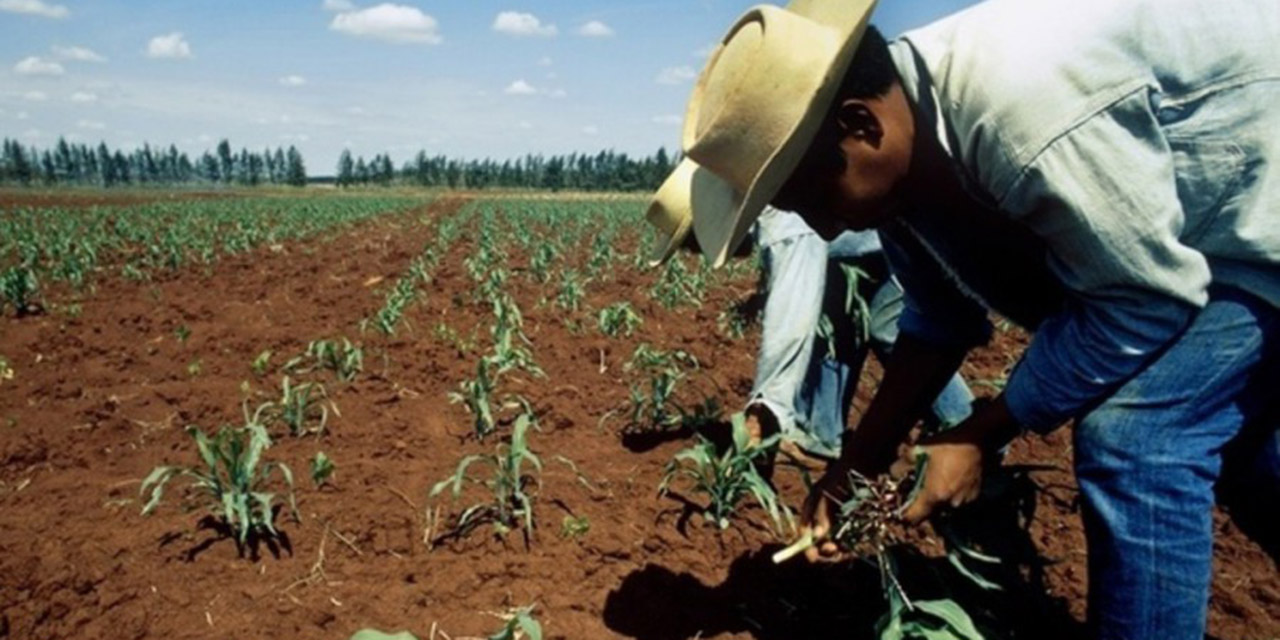 Reclaman a Sedapa apoyos para el campo | El Imparcial de Oaxaca