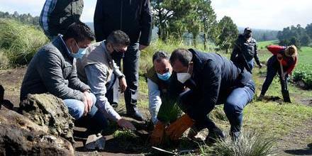 Cuauhtémoc Blanco gobernador de Morelos clausura la campaña estatal de reforestación   El Imparcial de Oaxaca