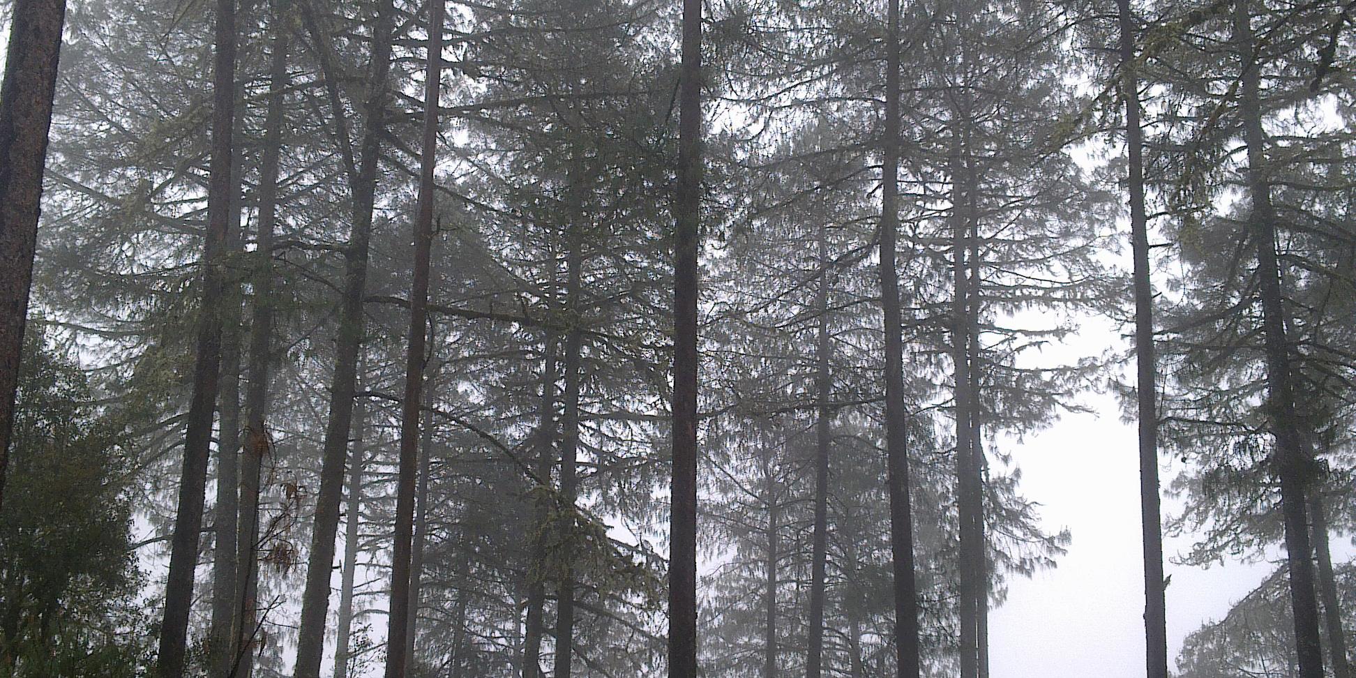 De potencia forestal a cuna de la tala ilegal | El Imparcial de Oaxaca