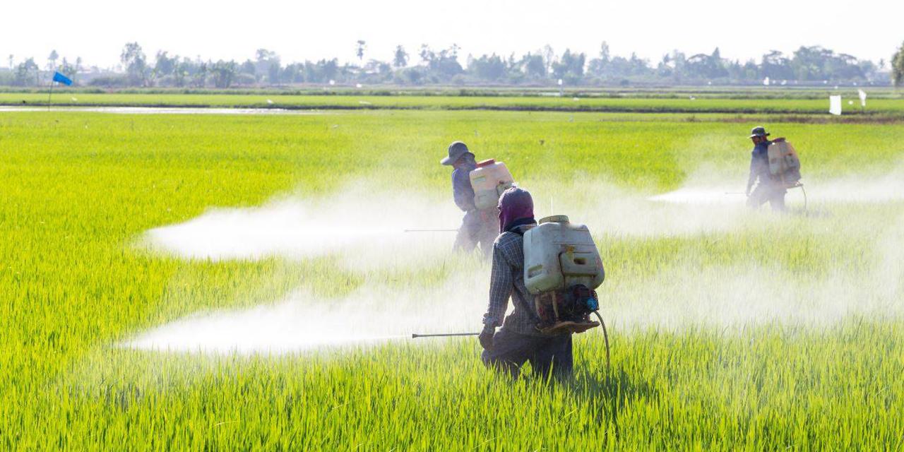 Prohíben uso del glifosato en el campo oaxaqueño | El Imparcial de Oaxaca