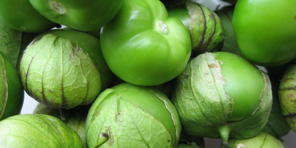 Beneficios del tomate  verde o tomatillo   El Imparcial de Oaxaca