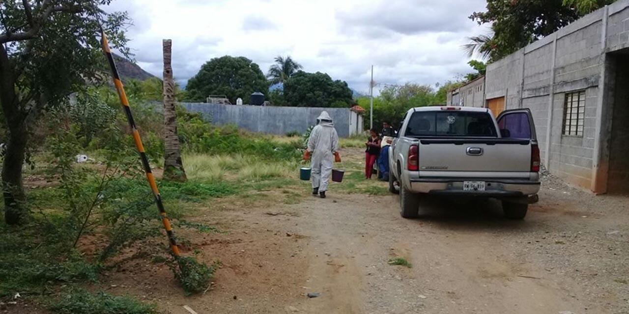 Aumentan llamadas de auxilio por abejas en el Istmo   El Imparcial de Oaxaca