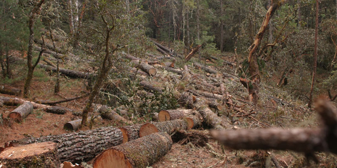 Incendios y plagas amenazan los bosques de Oaxaca | El Imparcial de Oaxaca
