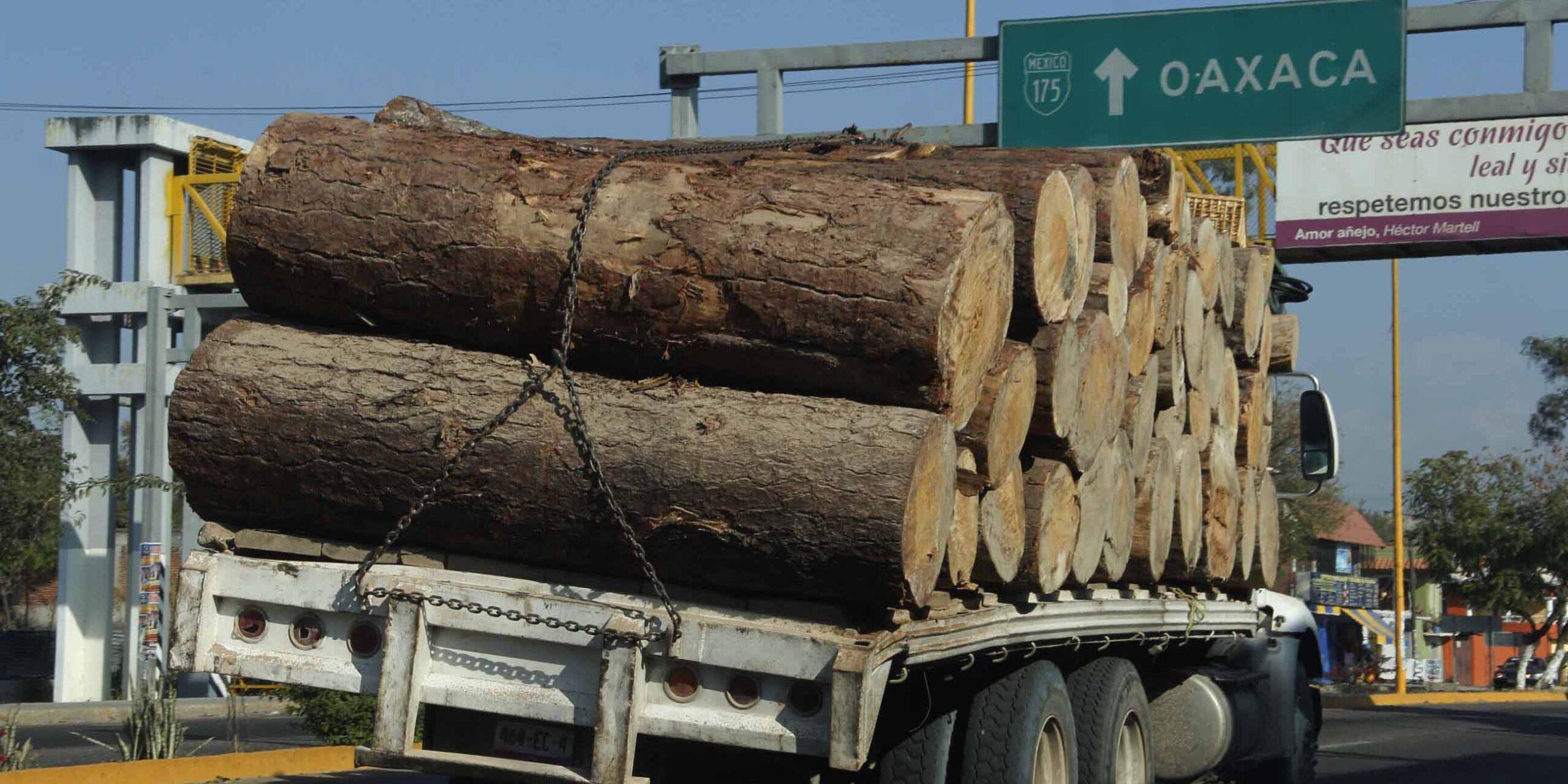 Tala ilegal arrasa con bosques de Oaxaca | El Imparcial de Oaxaca