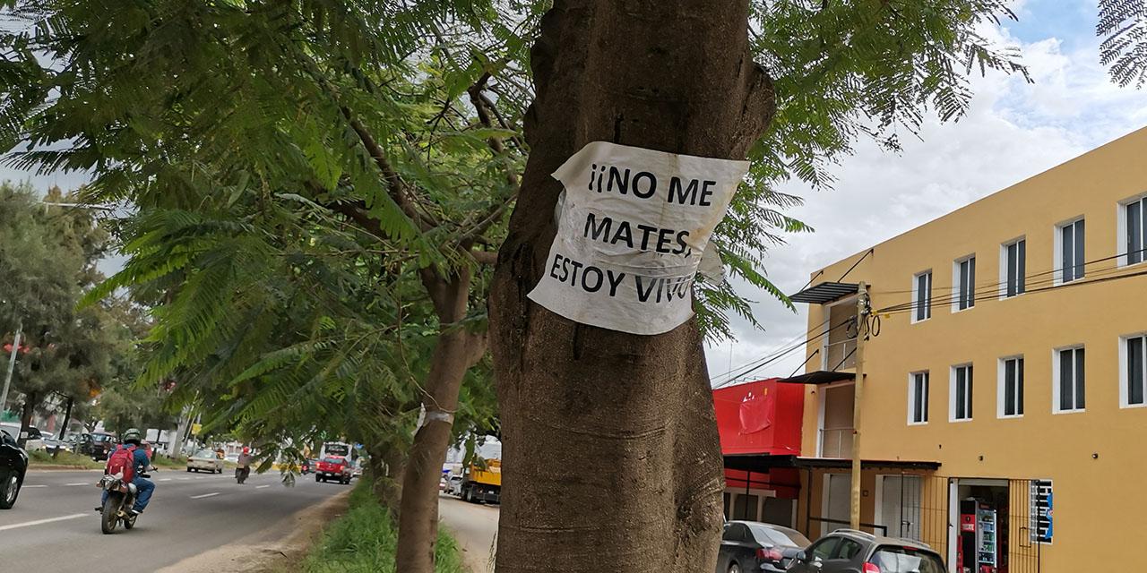 Llueven quejas y amparos a obra de Símbolos Patrios   El Imparcial de Oaxaca