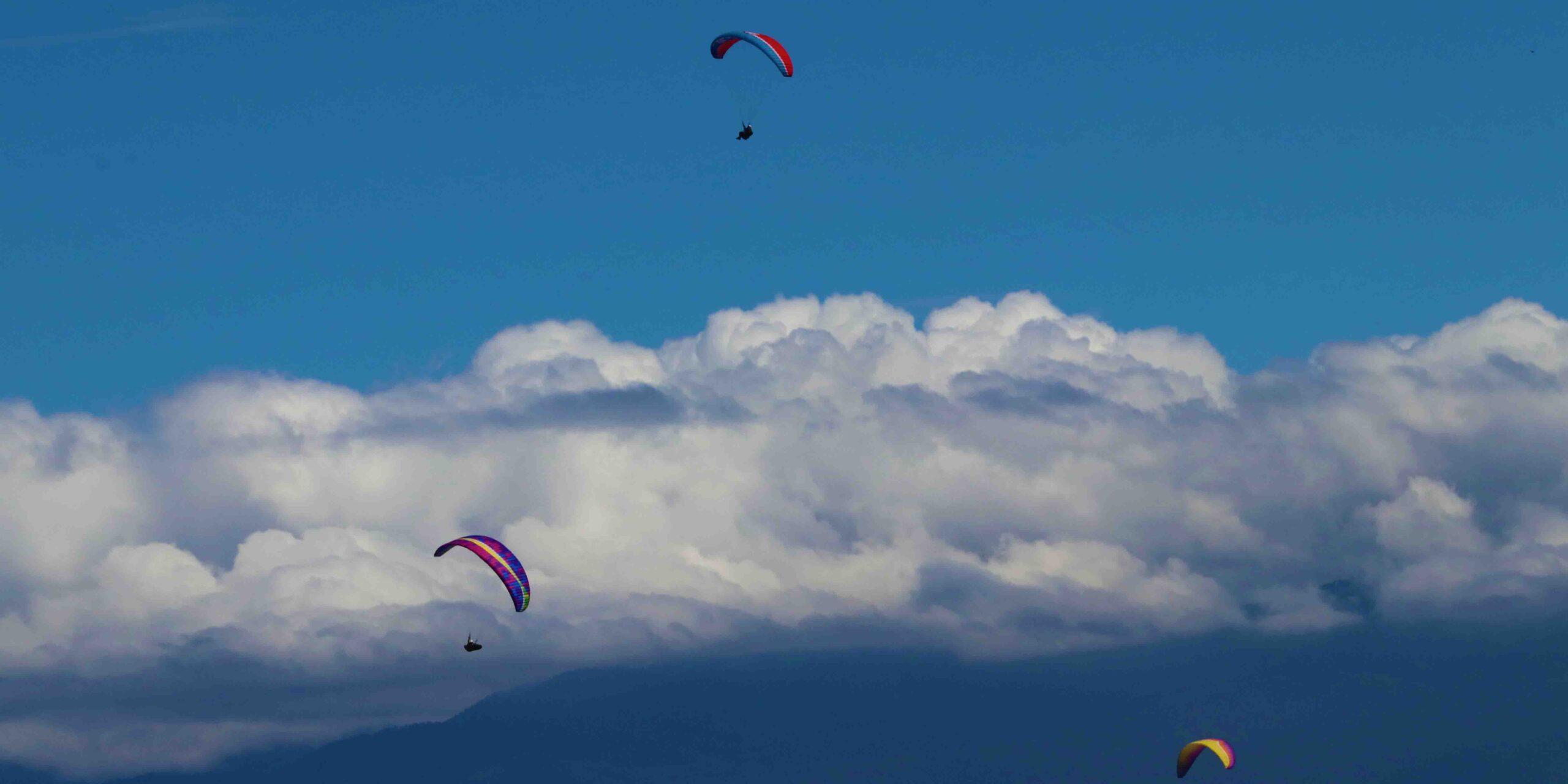 Preparan Alebrijes voladores vuelo con causa   El Imparcial de Oaxaca