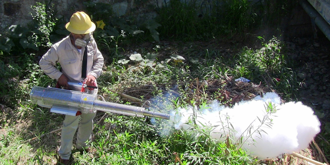 Acorralan a Oaxaca 6  brotes de dengue y 45 de Covid19   El Imparcial de Oaxaca