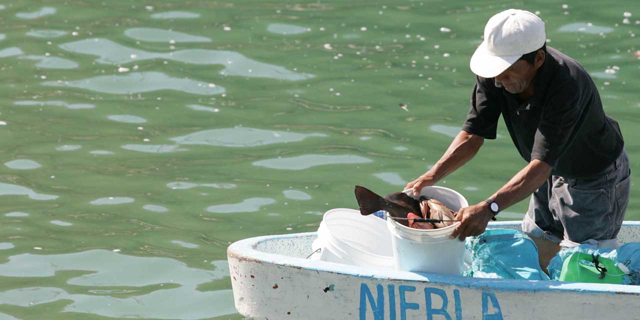 Oaxaca: debacle pesquero, zozobra 52% la producción | El Imparcial de Oaxaca