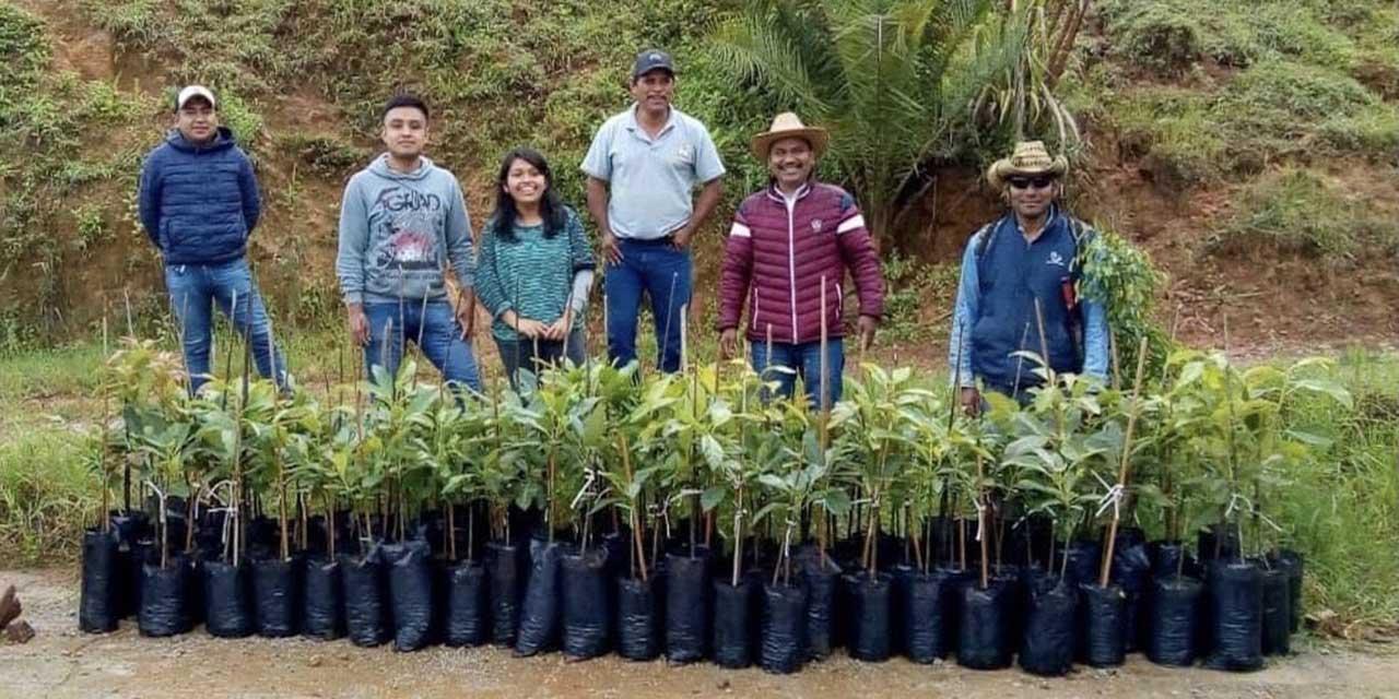 Retoman reforestación y cuidado del medio ambiente en Itundujia | El Imparcial de Oaxaca