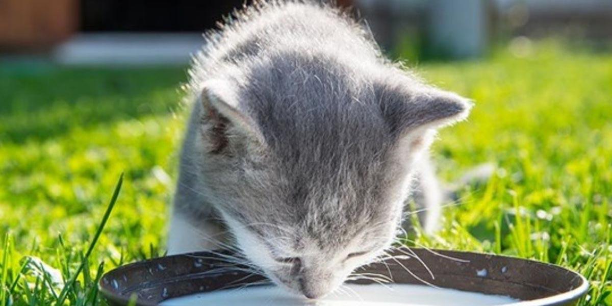 Datos interesantes sobre los gatos | El Imparcial de Oaxaca