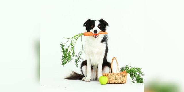 Los antioxidantes,  parte importante de la dieta de tu mascota   El Imparcial de Oaxaca