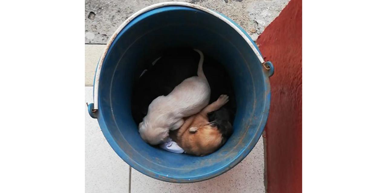 Video: Evidencian abandono animal; práctica persistente en la ciudad de Oaxaca
