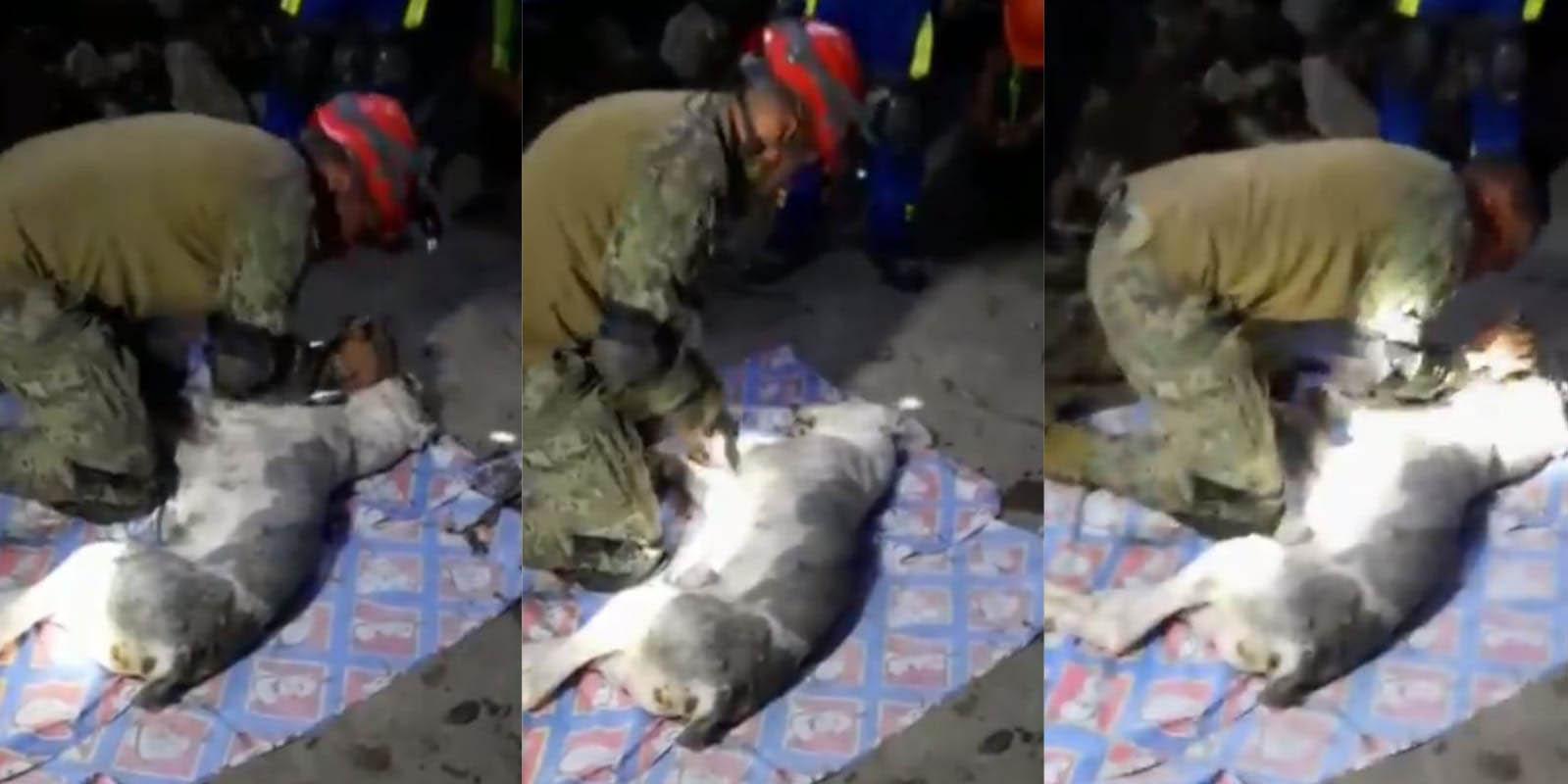 Soldado llora por no poder revivir a perrito atrapado en el Cerro del Chiquihuite | El Imparcial de Oaxaca