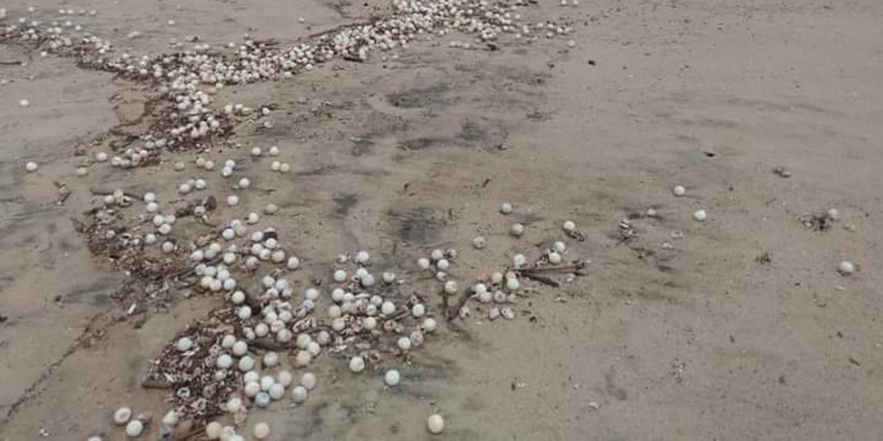 Oleaje elevado afectó anidación de tortugas marinas en Oaxaca   El Imparcial de Oaxaca