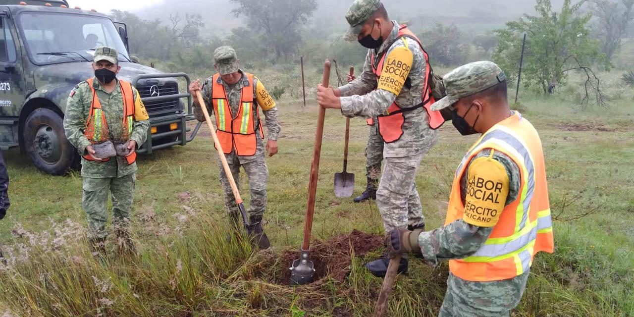 Reforesta Ejército Mexicano en agencia de Huajuapan | El Imparcial de Oaxaca