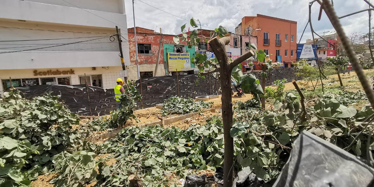Hago un llamado a las autoridades a evitar tala masiva de árboles: Marcoa, Pintor | El Imparcial de Oaxaca