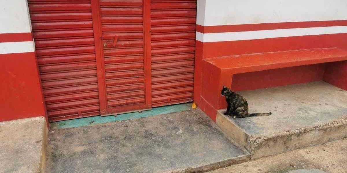 Video: Gatito espera a su dueño fallecido afuera de una tienda | El Imparcial de Oaxaca