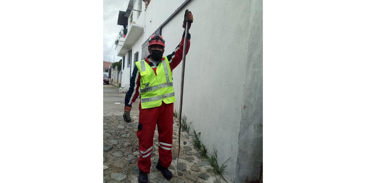 Serpiente merodeaba en un domicilio | El Imparcial de Oaxaca
