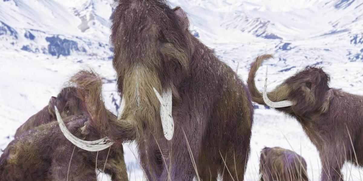 Empresa quiere hacer una des-extinción; desea traer de vuelta a los mamuts lanudos | El Imparcial de Oaxaca