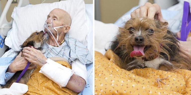 Veterano de guerra pide ver a su perrito como su último deseo | El Imparcial de Oaxaca