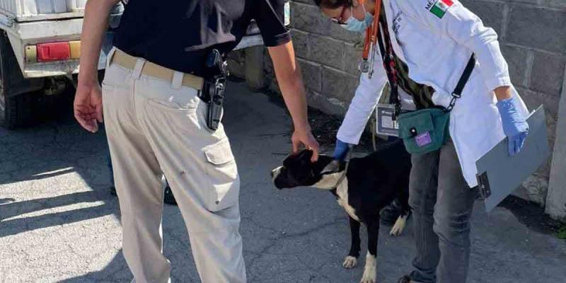 Rescatan a perrito en los huesos después de haber cateado vivienda en Hidalgo | El Imparcial de Oaxaca