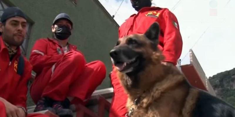 'Trebor' el perrito de la tercera edad que ayuda en el rescate de personas atrapadas   El Imparcial de Oaxaca