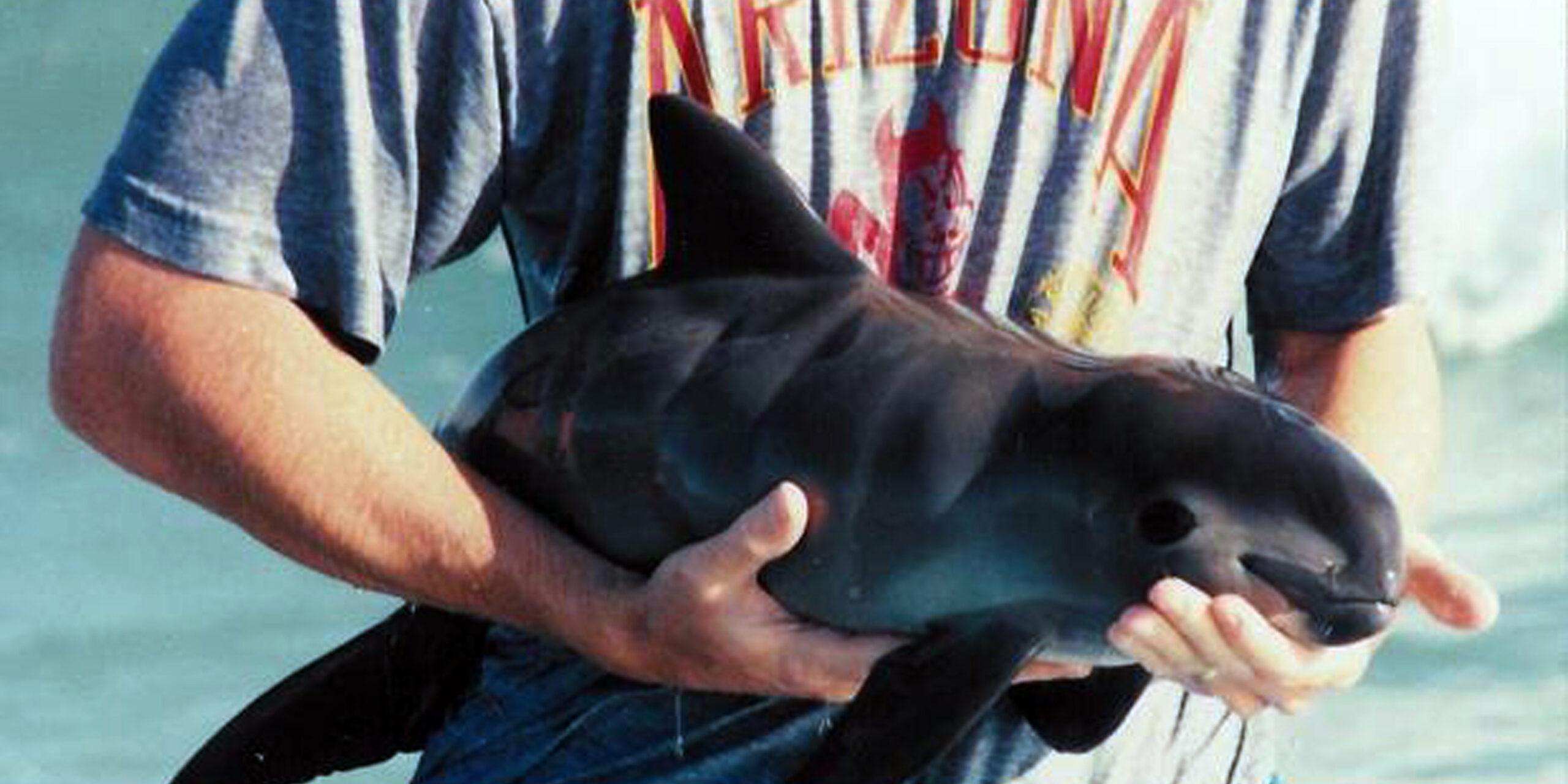 Dan entrada a la denuncia contra México por daños a la especia de la vaquita marina | El Imparcial de Oaxaca