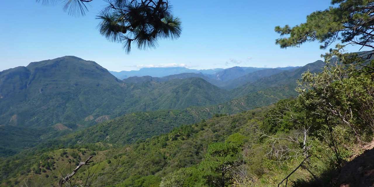 Deforestan más de 50 mil hectáreas en los Chimalapas | El Imparcial de Oaxaca