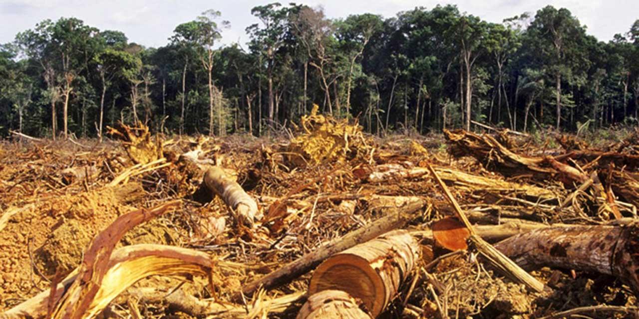 Invasores deforestan más de 50 mil has en los Chimalapas   El Imparcial de Oaxaca