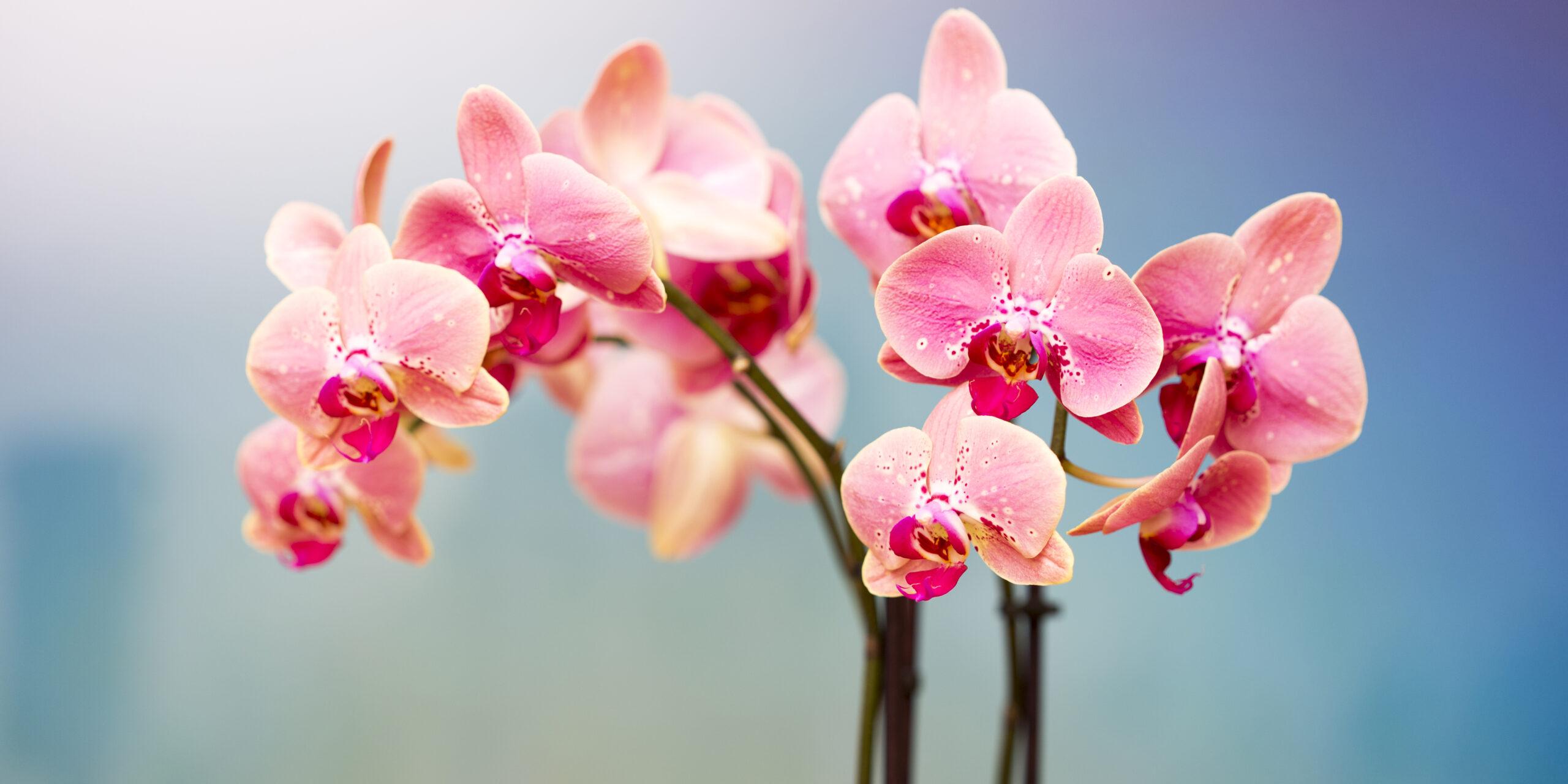 La compañía, la clave para mantener vivas a tus orquídeas   El Imparcial de Oaxaca