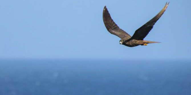 Aves terrestres realizan largos vuelos en el mar   El Imparcial de Oaxaca
