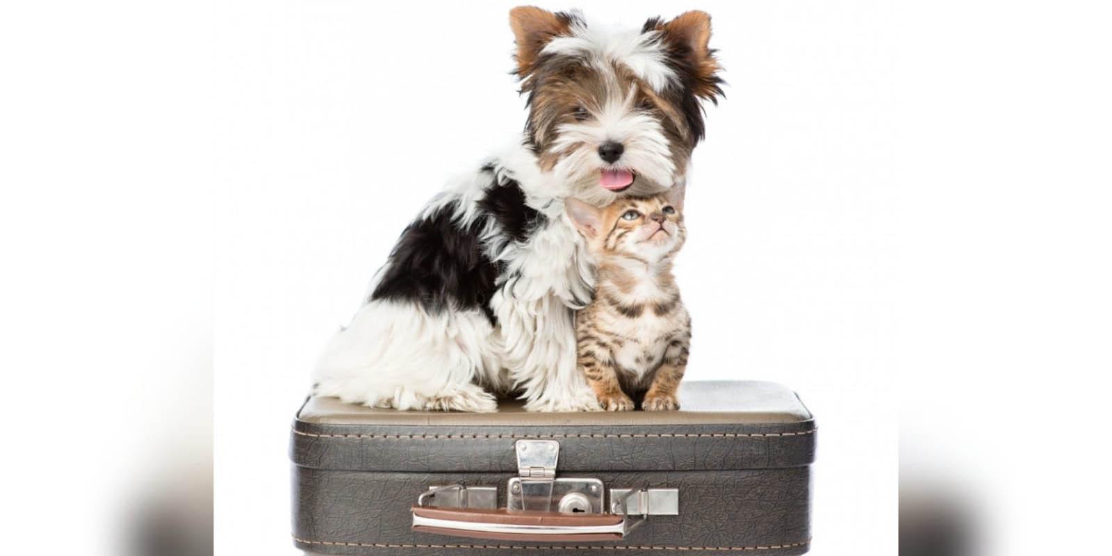La app que necesitas  para viajar con  tu mascota | El Imparcial de Oaxaca